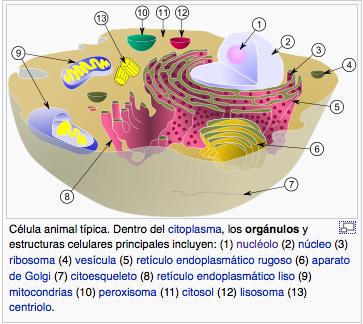 Celula animal típica