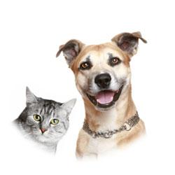 genes y mascotas