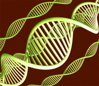 Datos geneticos