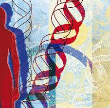 Noticias sobre genética. Citogen