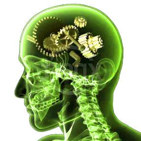 Genes que pueden condicionar el riesgo de trastorno mental
