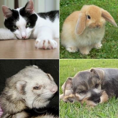 Las personas que tienen mascotas tienen una mayor calidad de vida